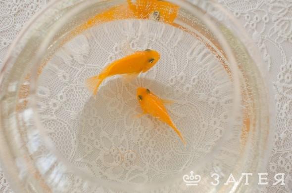 рыбки и кольца