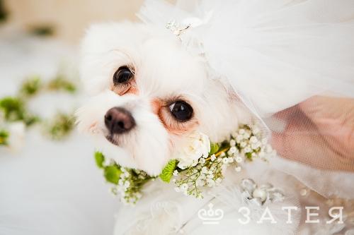 любимцы на свадьбе